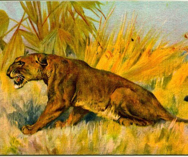Lionessx